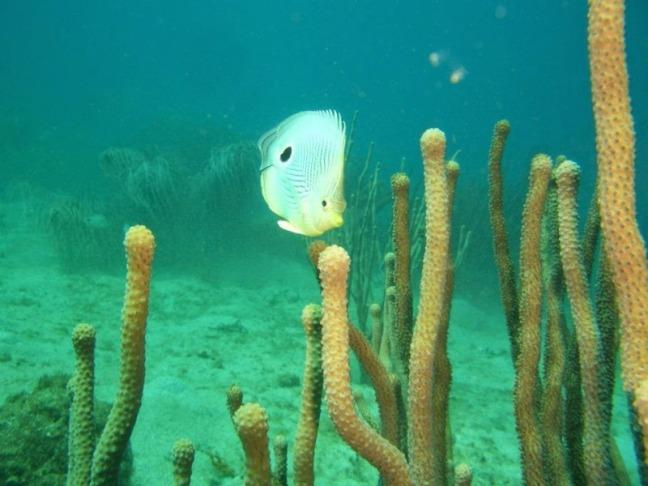 Especies marinas Los Frailes, estado Nueva Esparta