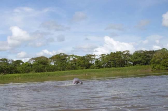 Rio Arauca