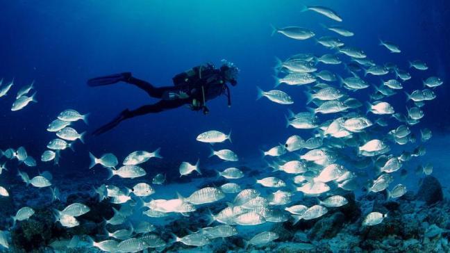 Costa Rica, biodiversidad, submarinismo